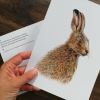 CARD – Irish hare, as featured in 'Dr Hibernica Finch's Compelling Compendium ..