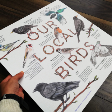 Info board featuring a selection of European birds – artwork by Aga Grandowicz