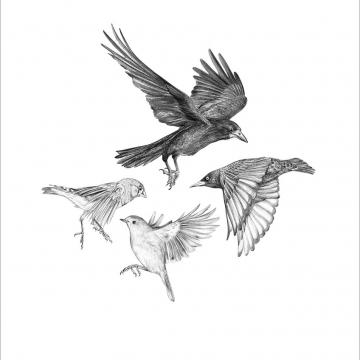 Garden birds #2 – A4 prints by Aga Grandowicz