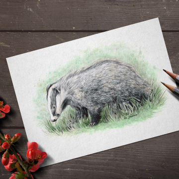 European Badger, A4 fine art prints, limited edition (20)