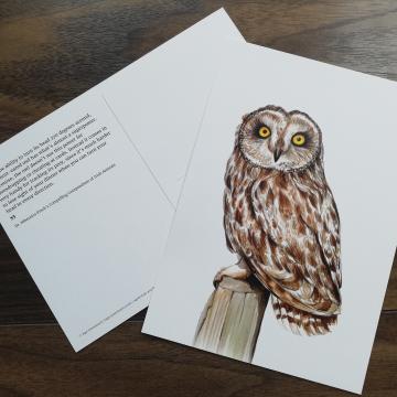 A5 CARD – Short-eared owl