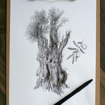 Olive tree – original artwork