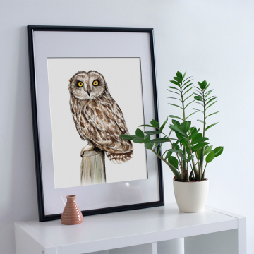Short-eared owl – A4 fine art prints, limited edition for each size (40)