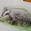 European Badger, A4 fine art prints by Aga Grandowicz