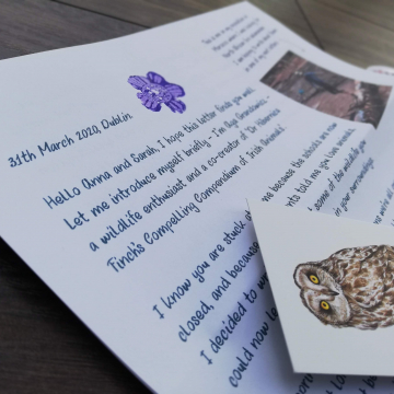 Wildlife letters for children – LETTER 1 – Bees | by Aga Grandowicz