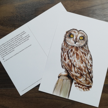 CARD A5 – Short-eared owl – Wildlife illustration by Aga Grandowicz