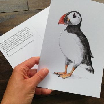 A5 CARD – Atlantic Puffin – Wildlife illustration by Aga Grandowicz