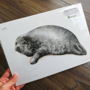 Seal, Wildlife illustration, A4 fine art print by Aga Grandowicz
