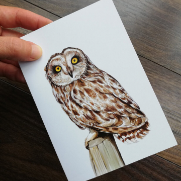 Short-eared-owl-artwork-greeting-card-by-aga-grandowicz_2