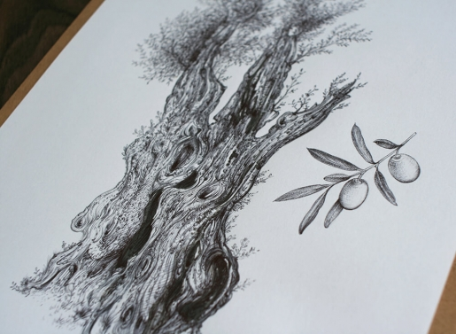 Drawing of an olive tree, no. 4, close-up.jpg