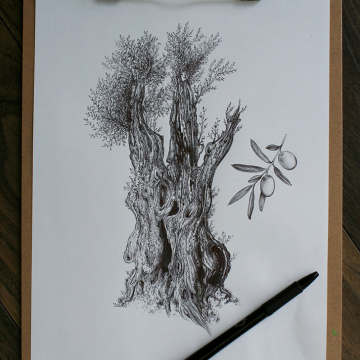Drawing of an olive tree, no. 4, full.jpg