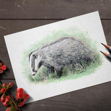 European Badger, A4 fine art prints, limited edition (20)