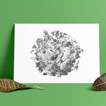 European Birds #1 – fine art prints, limited edition for each size (100)