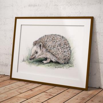 Hedgehog, A4 fine art prints, limited edition (20)