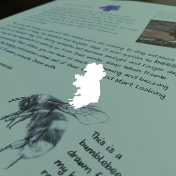 Wildlife letters for children – LETTER 1 – Bees – Ireland only