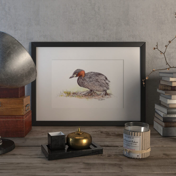 Little grebe duck – original artwork