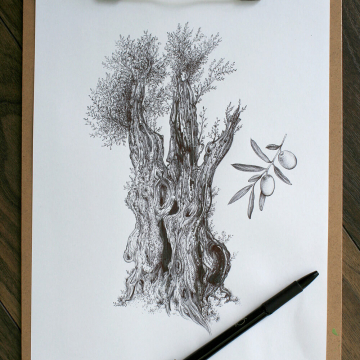 Olive tree – original artwork
