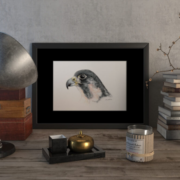 Peregrine falcon #2 – original artwork