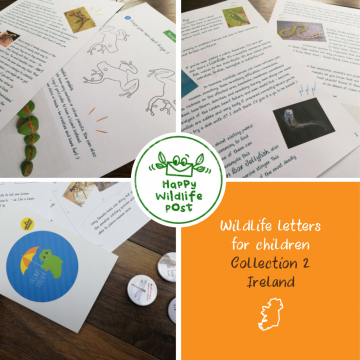 3 wildlife letters for children – COLLECTION 2 – Ireland